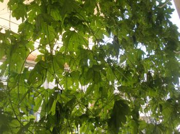 20110914-s_P9130419.JPG